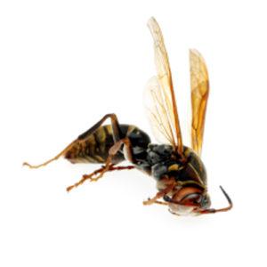 idaho Falls Residential Pest Control